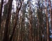 Travel Photography San Francisco Presidio Brown Trees