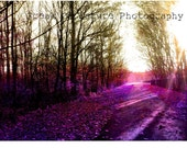 Fine Art Photography Digital Download Forest Autumn Fall Whimsical Purple Photography Surreal Sunlight Printable Art Photo Photograph