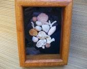 Sea shell shadow box, natural shell & coral collage, coastal beach decor