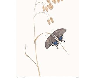 Spicebush Swallowtail Vintage Style Print