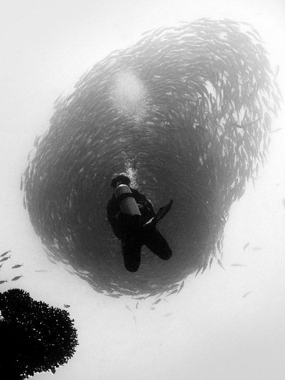 RESERVED for Vanessa - Black and white photograph of schooling fish on loose canvas