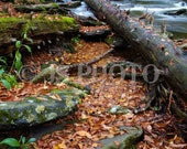 8x10 Fine Art Photograph - Trees Down on Smokey River, Great Smokey Mountains National Park