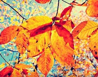 Optimistic Photography, Autumn Decor, Fall Foliage Wall Art, Orange and Blue, Colorful Nature Photo, Vibrant Print
