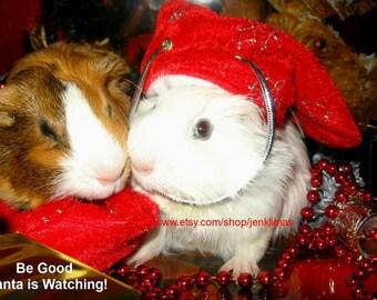 GUINEA PIG Christmas Magnet Gift Set - 5 Funny Magnets - Great Stocking Stuffer!