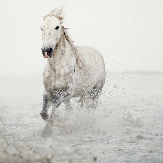 Nature Photography, Minimalist Horse Art, White Horse in Water, Horse Photography, Large Wall Art, Fine Art Photography - Wild at Heart
