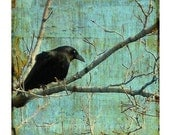 Collage Style Crow , Raven Art, Blackbird Image, Bird, Nature, Animal, Blue Vintage Style - Inquisitive Crow