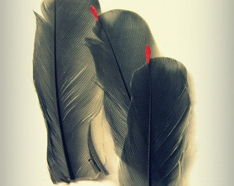 Cedar Waxwing Feathers Photograph