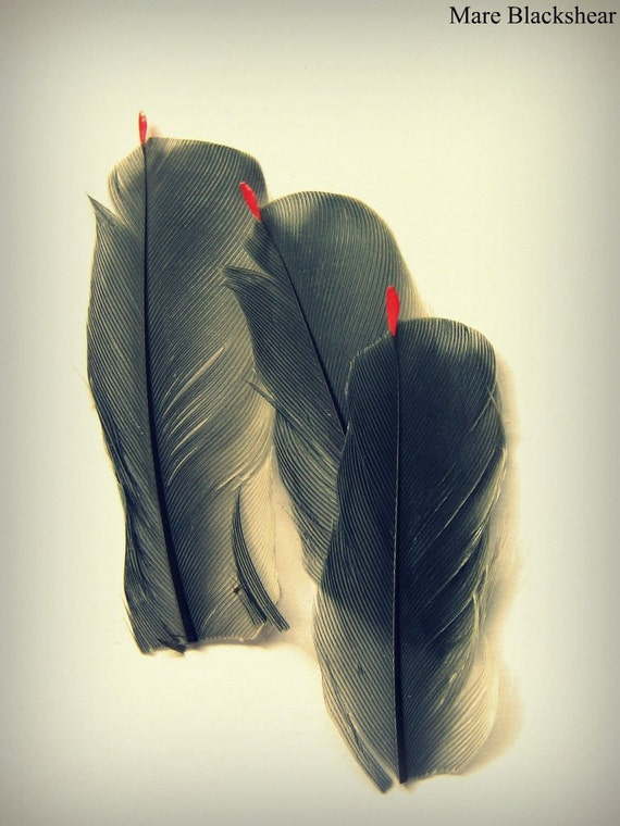Cedar Waxwing Feathers Photograph