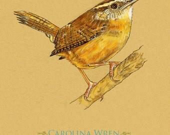 Carolina Wren Bird 8 x 10 Art Print   Does NOT come framed