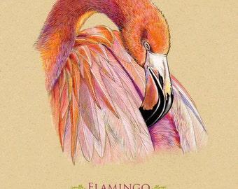 Giclee Art Print. Flamingo Bird. 8 x 10 inches