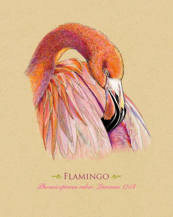 Art Print Flamingo Bird 8 x 10 inches, does NOT come framed