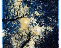 China blue, 8x10, Art, photography, nature, moon, tree art, navy blue decor, Fine Art Photography, Home decor, Blue decor, Nature decor