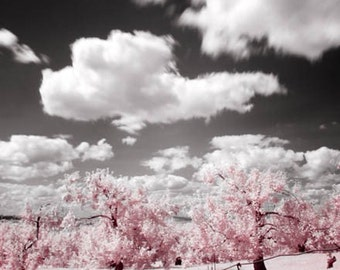 BOGO (Buy one, get one free) - The Old Orchard - Fine art print - Borderless photo