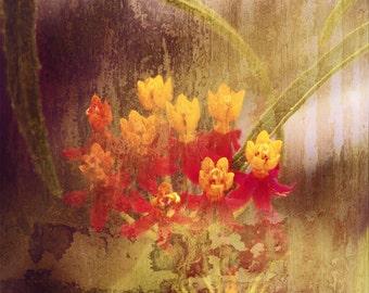 Red Yellow Flower Photograph Misty English Garden Flowers Rain Nature Floral Fine Art