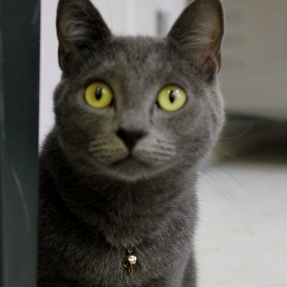 Bird Skull Cat Charm - Olive's Bling.....In Solid Bronze 005