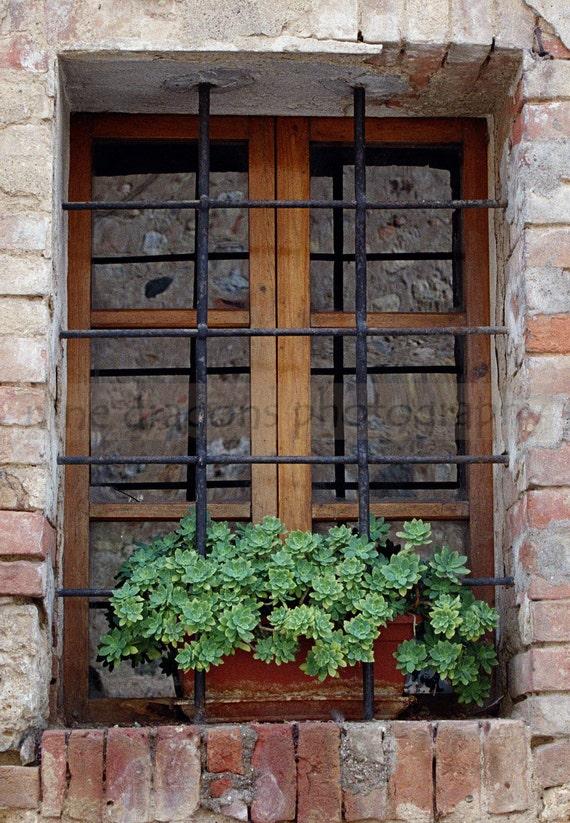 Italian Window, Miniature Art, Window Wall Art, Window Photography, Rustic Italian Art, Succulent Flower Photography, Hens Chicks Flower Box