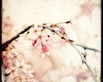 Sakura - Fine Art Print - TTV - Nature Photography - TFTeam