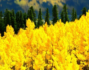 Autumn Lake Colorado Gold Fall Aspen Forests Reflection Leaves Yellow Rustic Cabin Lodge Photograph
