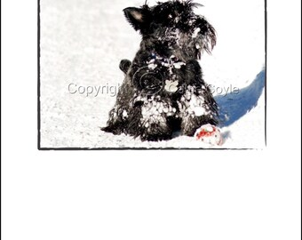 Scottie Dog With Red Ball - Scottie Dog Holiday Greeting Card - Scottish Terrier Christmas Card - Scotty Dog Photo Greeting Card