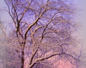 """Christmas photography of trees, lavender, blue, evening sky, black tree branches, winter decor,  5"""" x 7"""" fine art"""