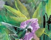 Cap Tourmente Hummingbird - Open edition print of an original watercolor (fits 11x14 frame)