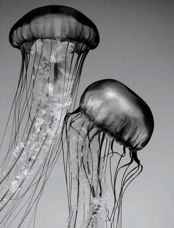 Jellyfish Art, Black and White Nature Photography, Nature Wall Art, Wildlife Photography, Animal Art Print