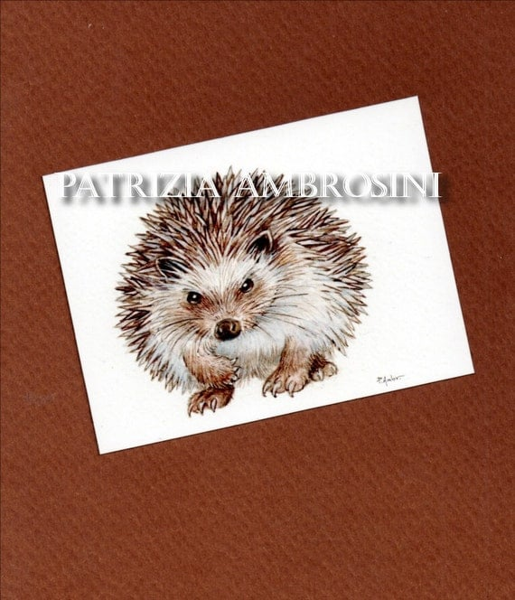 hedgehog -- ACEO PRINT  animal collectible card