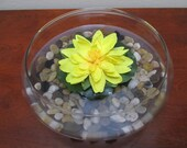Yellow Water Lilly in Garden Dish