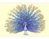 Peacock - Color Art print