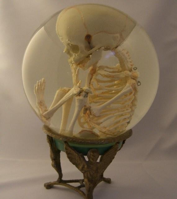 human fetal skeleton in glass womb, Skeleton