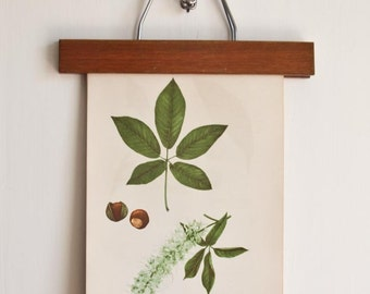 Antique Botanical Print Set  /  Five Prints