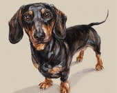 Dachshund art print - Ltd. Ed Collectable
