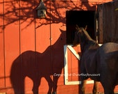 Animal Photograpy Horse Greeting Card Equine Photography gift for pet lover Horse Peeks in Stall Door Shadow on Red Barn