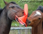 Horse Photo Card Equine Photography Two Horses Play Tug of War With Traffic Cone