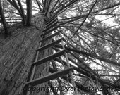 Nature Photography Tree Greeting Card Black and White Photography Handcrafted Greeting Card Ladder to Childhood in Tree Tops