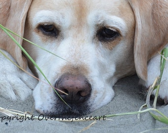 Dog Card Yellow Labrador Handcrafted Photo Greeting Card Dog Photography Salty Sea Dog Rests His Paws in the Sand
