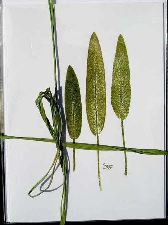 Botanical stationery, sage herb print note cards, leaf print of sage w/packet of dried sage, great gift for hostess, chef, gardener under 20