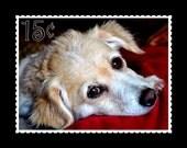 Sweetpea... 8x10 Photographic Print... Sales benefit animal charities