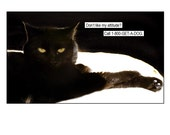 Cat, black cat art, photo collage, animals, dogs, Funny, Fun, Dog, Silly, Cat Lover, Note Cards, Blank Inside, SET OF 4