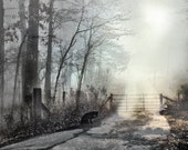 MISTY PATH to NOWHERE - Poetic Romantic Rustic Foggy Forest Lane Mysterious Black Cat Steel Blue & Gray Tones Signed Fine Art Photograph