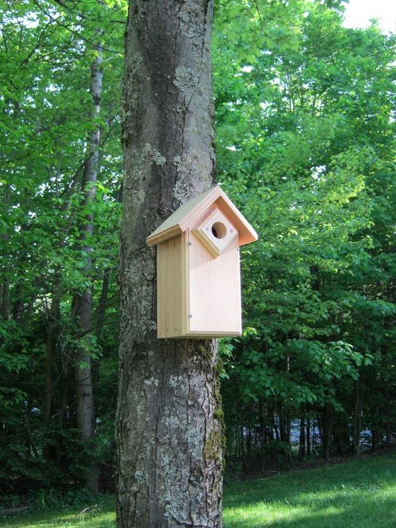 Eastern Bluebirds,  Birdhouse with entrance hole guard.