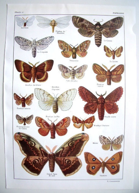 French 1958 Butterflies Print Butterfly Species Book Plates 3 & 4  - For Framing or Altered Art - Butterflies Wall Art