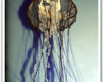 Jellyfish the Medusa and it's Shadow Distressed Photography Art Print 8x10