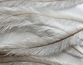 Long Emu Feathers - 100 feathers 4in-6in long - FINAL SALE