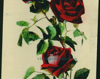 Antique Christmas postcard, 100 years old, Hearty Xmas Greetings, Victorian, dark red roses