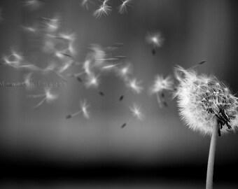 5x7 POSTCARD - Dandelion Wishes