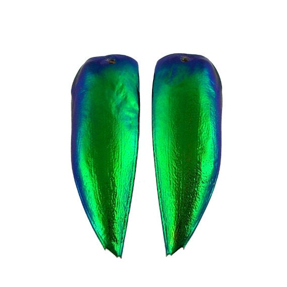 SALE - 2pcs Jewel Beetle Elyctra Wings, Drilled and Trimmed, Sternocera - 30% OFF
