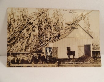 Antique 1910  Photo Kansas Postcard  of Land of Big Corn