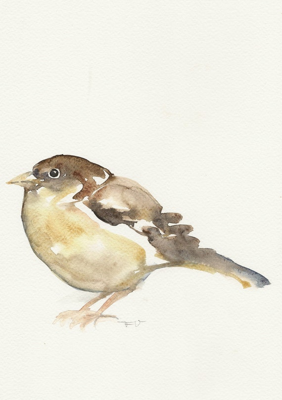 Sparrow, Original watercolor painting, animal art, bird watercolor painting art.