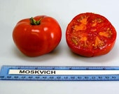 Moskvich  Heirloom Tomato Seeds  Non GMO
